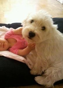 Bebé y westie juntos en el cojín.
