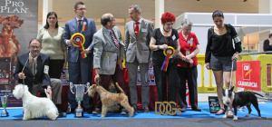BIS y RBIS de la exposición monográfica de terriers