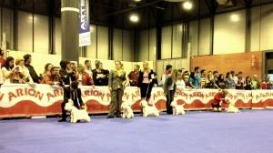 Durante el jucio de la clase abierta en la 6 Exposición Internacional Canina de Primavera Madrid 2014