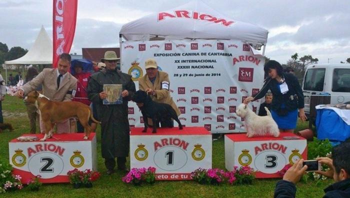 XXXV Exposición Monográfica de Terriers, Cantabria 2014 - Podium Best In Show