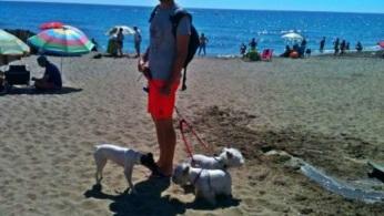 Perros en la playa canina de fuengirola