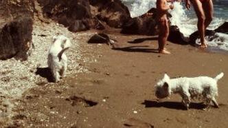 Dos westies en las rocas de la playa canina de fuengirola